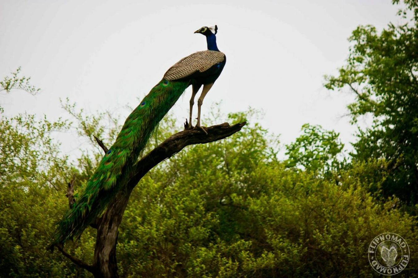 keoladeo national park bharatpur