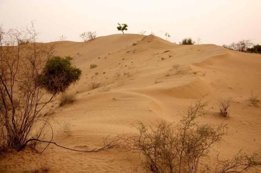 Thar Desert Pakistan