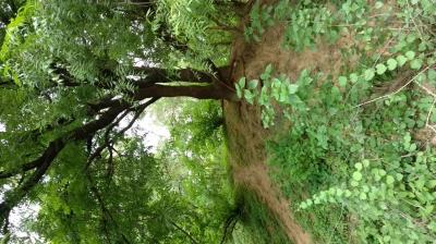 Indroda Nature Park, Gandhinagar