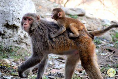 Monkey Point (Kasauli)