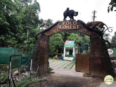 Polo Forest